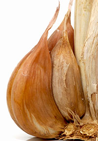 Cardiovascular Protection by Combined Treatment with Aged Garlic Extract and Coenzyme Q10