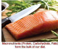 Macronutrients Part 1 - Proteins