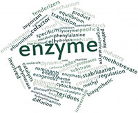 ENZYMES in Health and Disease