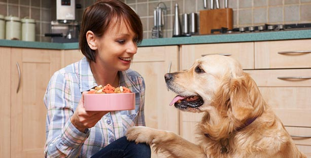 Feeding CBD to pets Sherrill Sellman