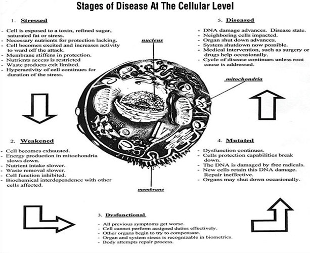 Stages of Disease at the Cellular Level Charles K Bens