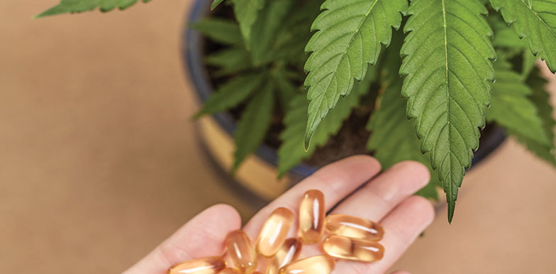 An Introduction to Hemp, CBD & Phytocannabinoids