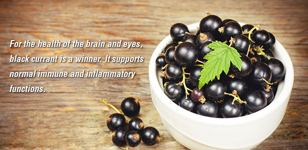 Black Currant Not Just Another Berry