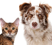 Orthomolecular Medicine for Pets Part 2